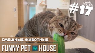 СМЕШНЫЕ ЖИВОТНЫЕ И ПИТОМЦЫ #17 ОКТЯБРЬ 2018 [Funny Pet House] Смешные животные