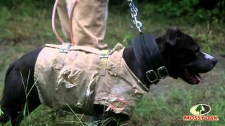 Hog Hunting Part 1 - Mossy Oak