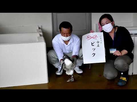 ◆子どもペンギンの命名式◆