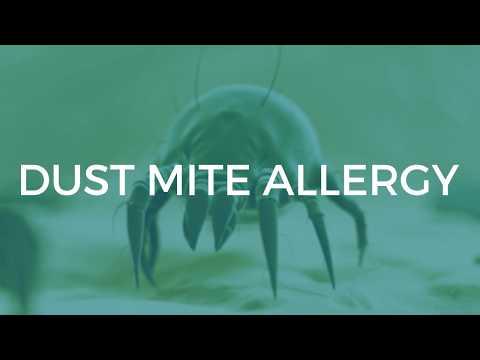Alergia na roztocza kurzu - objawy i leczenie