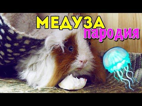 MATRANG - Медуза (ПАРОДИЯ от SvinkiShow)