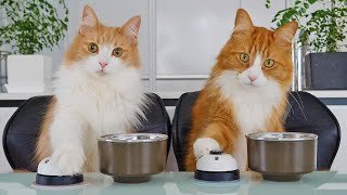 Teaching my cats to ring a bell