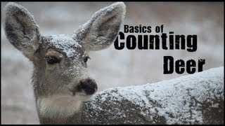 Basic Sampling Techniques - Counting Deer