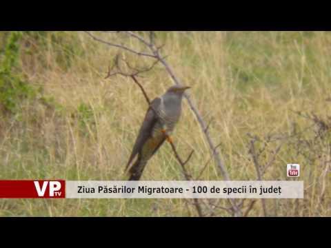 Ziua Păsărilor Migratoare – 100 de specii în județ