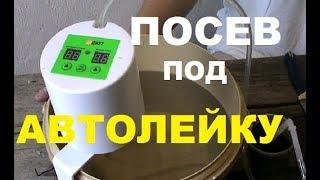 ЛЕТНИЕ ОГУРЦЫ под АВТОЛЕЙКУ от ДАДЖЕТ