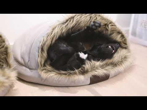 Dog Bed Igloo