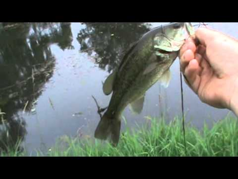 Pond Bass Fishing and Awesome Topwater Pike Strike
