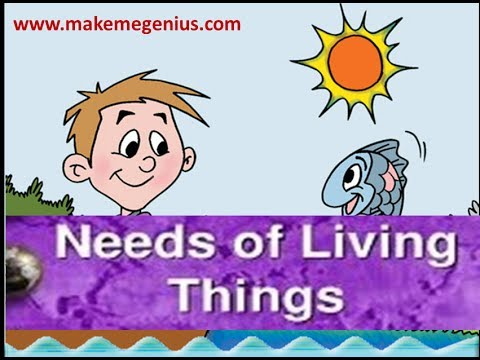 Needs of Living Things Animation Kindergarten Prescoolers Kids