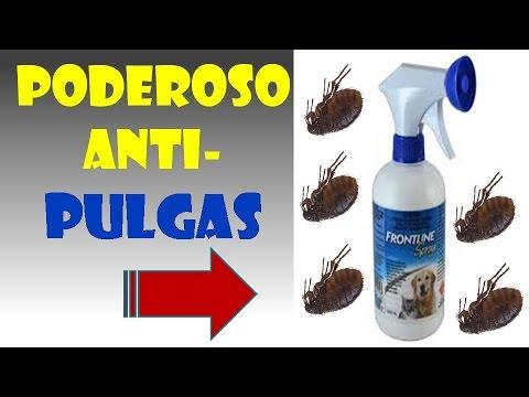 Tutorial na video sa biology ng mga parasito