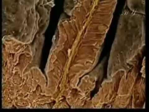 Может ли гепатит вызвать аллергию