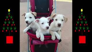 Concierto Solidario Animalista el 26/12/2018