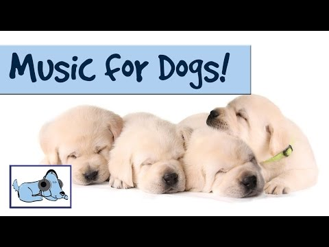 DOG MUSIC - RELAX YOUR DOG! UNIQUE SOUND TECHNOLOGY RelaxMyDog 🐶 RMD05