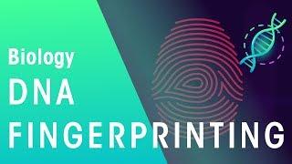 DNA Fingerprinting   Genetics   Biology   FuseSchool