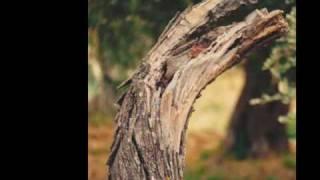 preview picture of video 'Fiume PLATANI HALYKOS  ABISSO  CIANCIANA Sicilia - Agostino D'Ascoli'