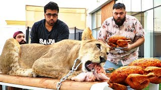 اتحدينا ملك الغابة الأسد🦁  ١٠ دجاجات!! | Lion Eating Challenge
