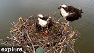 Chesapeake Conservancy Osprey Cam powered by EXPLORE.org