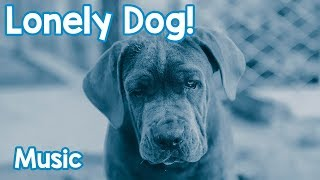 Music for Lonely Dogs! Keep Your Dog Relaxed and Happy with this Music!
