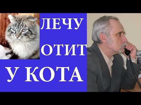 Лечу кота от отита. Ходил к ветеринару. Купил лекарства.#отит #кошек #ушной