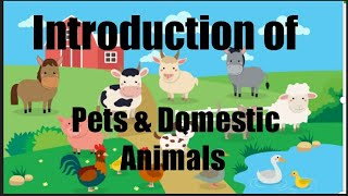 How to introduce domestic & pet animals to kindergartens | introduction of domestic & pets animals