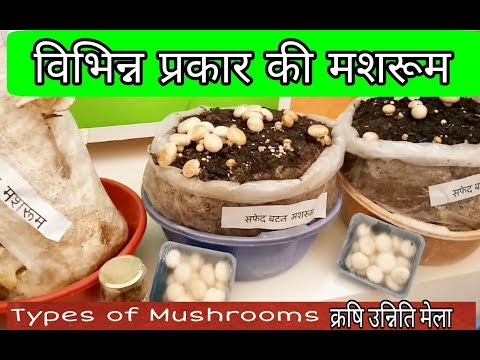 Mushroom - Wholesale Price & Mandi Rate for Mushroom