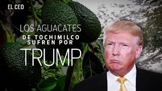 Los aguacates de Tochimilco sufren por Trump