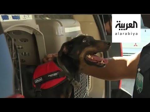 العرب اليوم - شاهد: كلاب مدربة للكشف عن مصابي