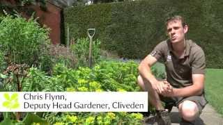 Top tips from National Trust Gardens - June