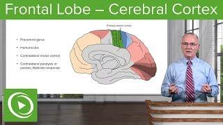 Frontal Lobe – Cerebral Cortex   Lecturio