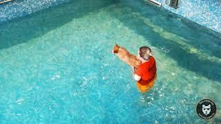 Piscine : première nage pour Puppies !