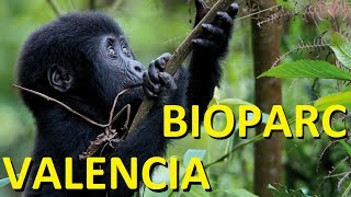 preview picture of video 'Bioparc Valencia'