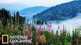 Дикая природа России: Сибирь   Фильм 1 из 6   (National Geographic)