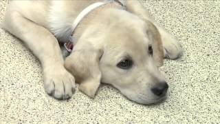 DocTalk - Heartworm Disease in the Cow Dog 480p