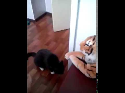 Funny Cat Fight With Tiger Toy