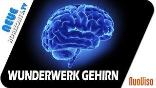 Das Gehirn – Wunderwerk der Selbstheilung – Dr. Ulrich Werth