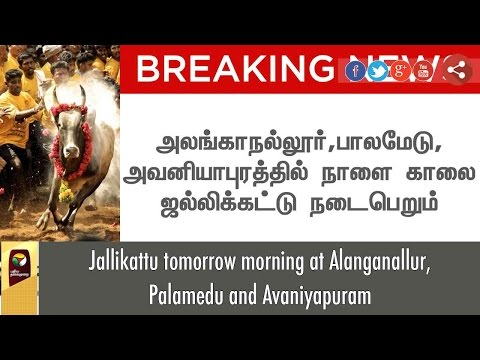 BREAKING NEWS: Jallikattu tomorrow morning at Alanganallur, Palamedu and Avaniyapuram