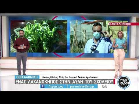 Θεσσαλονίκη: Ένας λαχανόκηπος στην αυλή  σχολείου   15/06/2021   ΕΡΤ