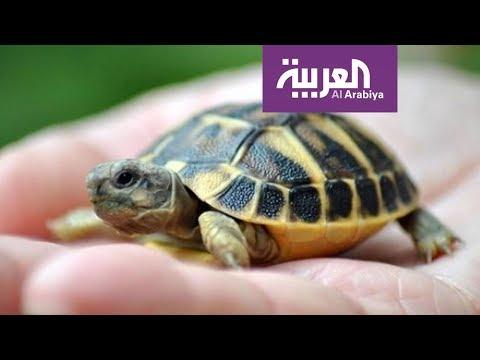 العرب اليوم - وجبات غريبة تقدم لمرضى فيروس