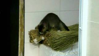 What is this cat searching for?