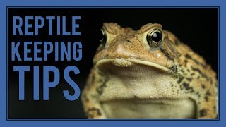 5 Quick Tips for Reptile Keepers!