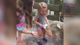 Zoo Buddies