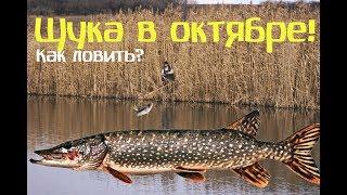 Ловля щуки на реках в октябре