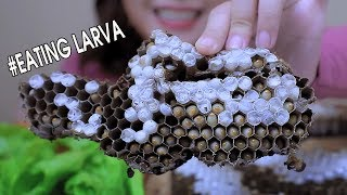 ASMR eating Grilled wasp Larva in honeycomb Challenge(Exotic food) Extreme EATING SOUNDS | LINH-ASMR