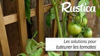 Comment tuteurer les tomates