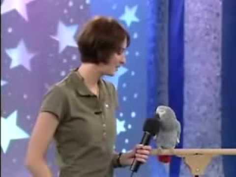 Con vẹt có khả năng nghe và nói như người - Kinh dị thiệt =)