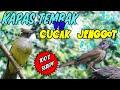 Download Lagu MASTERAN SUARA KAPAS TEMBAK ngeroll VS CUCAK JENGGOT BESET panjang - MATERI WAJIB BURUNG JUARA Mp3 Free