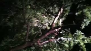 В Туле из-за грозы дерево упало на проезжую часть