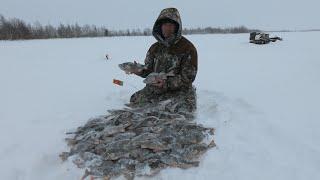 Ловля окуня на мясо зимой