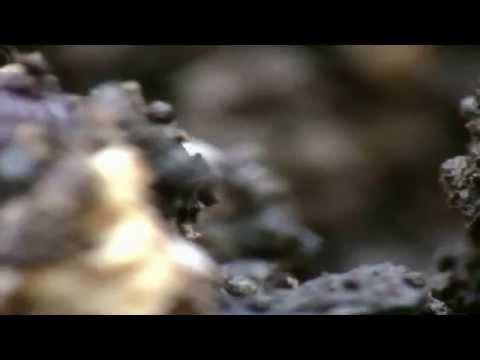 Paraziták zivotinja