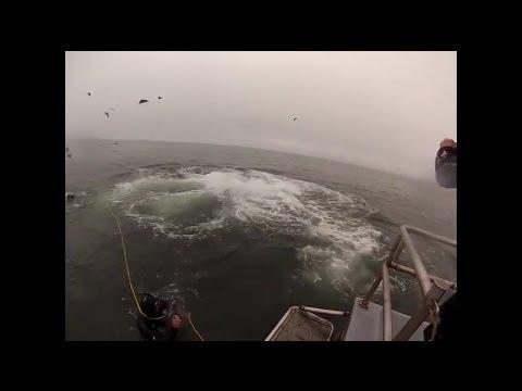 驚險萬分~2名潛水員正在海裡做觀察,突然群魚亂舞,瞬間水底