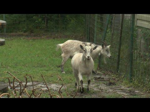 news possumwood acres wildlife sanctuary